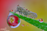 Drops and Cicadellidae