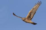 Raptors & Vultures