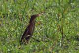 Tanzania - Birds General