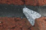 Miller Moth, Baillieston, Glasgow