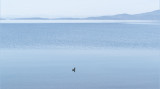 Peace And Solitude