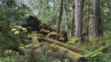 Rain Forest Growth