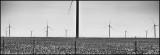 Wind Generators In A Cotton Field
