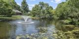 A Family Pond