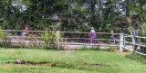 Rural Farm Kids