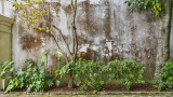 Wall Planting, Downtown, Charleston