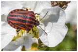 Fleurs, plantes  et  insectes