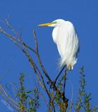 Wildlife (Northern California Birds)