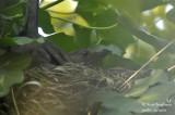 2544-nest building