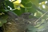 2549-nest building