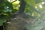 2560-nest building