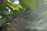 2563-nest building