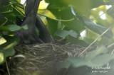 2569-nest building