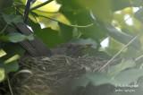 2572-nest building
