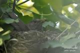 2575-nest building