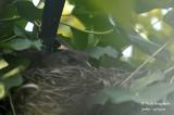 2578-nest building