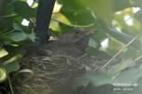 2582-nest building