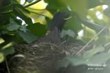 2584-nest building