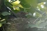 2593-nest building