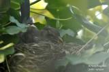 2598-nest building