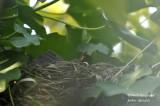 2600-nest building