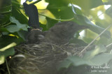 2604-nest building