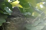2607-nest building