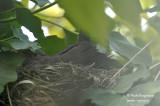 2610-nest building