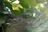 2614-nest building