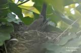 2615-nest building