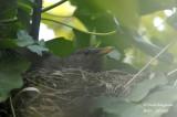 2618-nest building