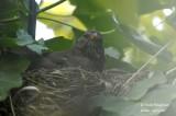 2619-nest building