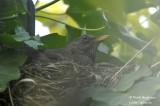2620-nest building