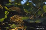 2640-female at nest