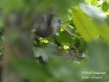 3072-Female leaving the nest