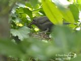 3082-Chick-feeding