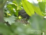 3089-Chick-feeding