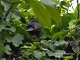 3245-chick-feeding