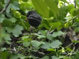 3318-chick-feeding