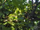 3300-Nest in the sun