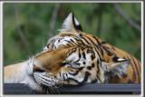Le Miller Zoo est un jardin zoologique et un centre de réhabilitation de la faune