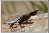 MACRO / Insectes - Insects