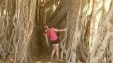Janet Banyan tree Honolulu 2019