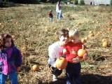 1993 Pumpkin Patch Woodbridge
