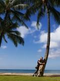 2015 Hawaii palm tree