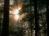 Forest fog 02