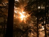 Forest fog 03