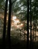Forest fog 04