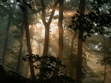 Forest fog 05