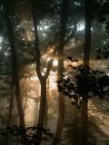 Forest fog 06